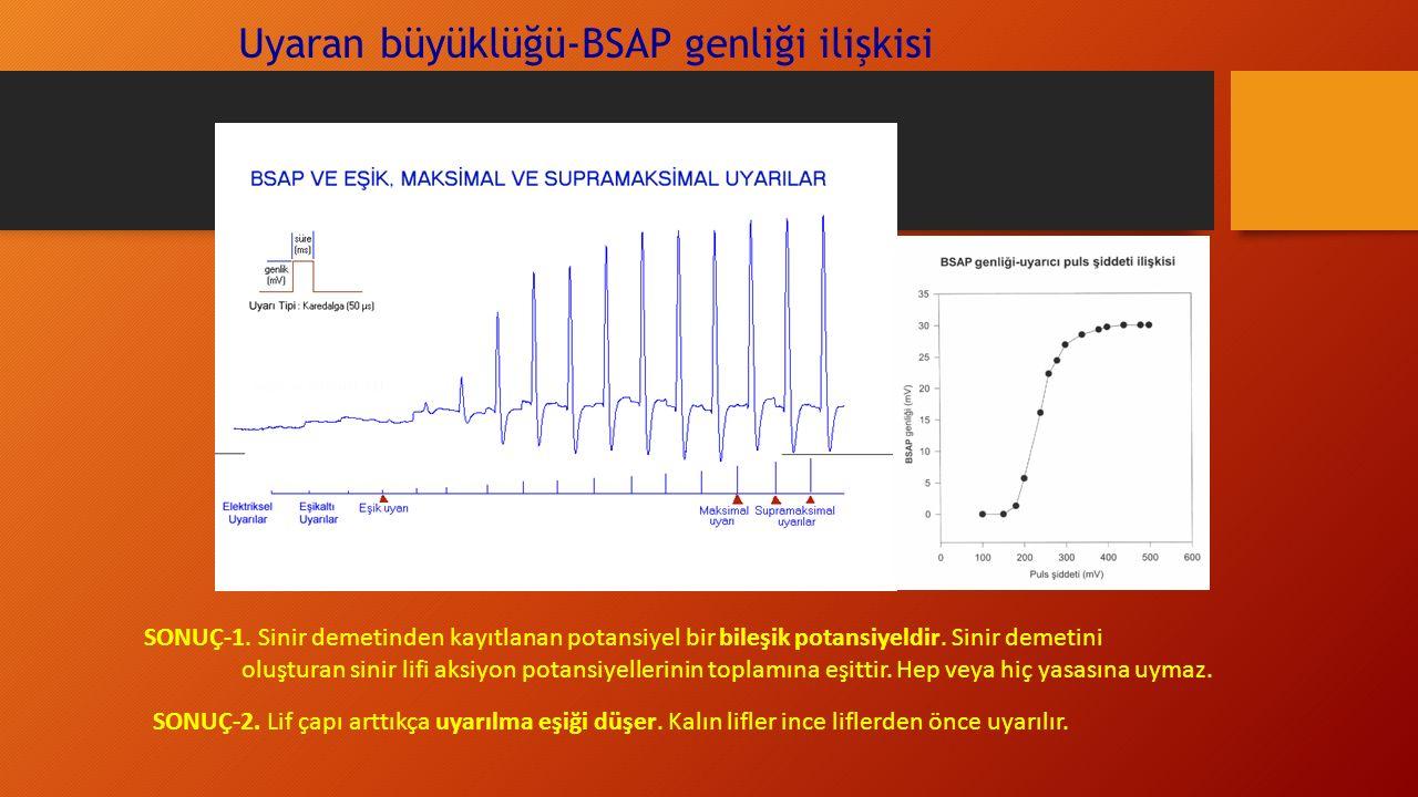 Uyaran büyüklüğü-BSAP genliği ilişkisi