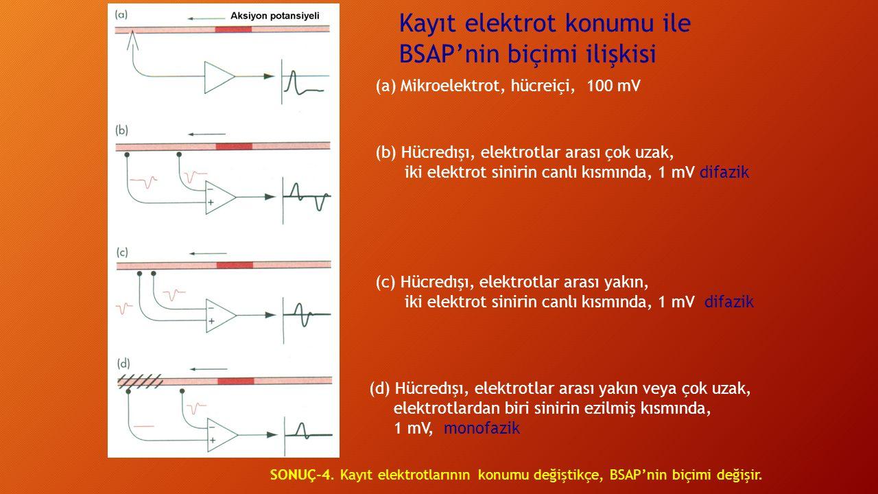 Kayıt elektrot konumu ile BSAP'nin biçimi ilişkisi