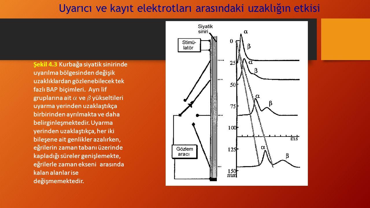 Uyarıcı ve kayıt elektrotları arasındaki uzaklığın etkisi