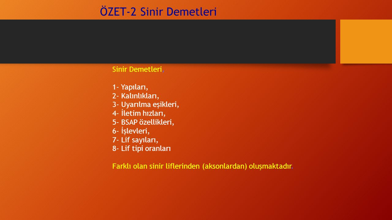 ÖZET-2 Sinir Demetleri Sinir Demetleri, 1- Yapıları, 2- Kalınlıkları,