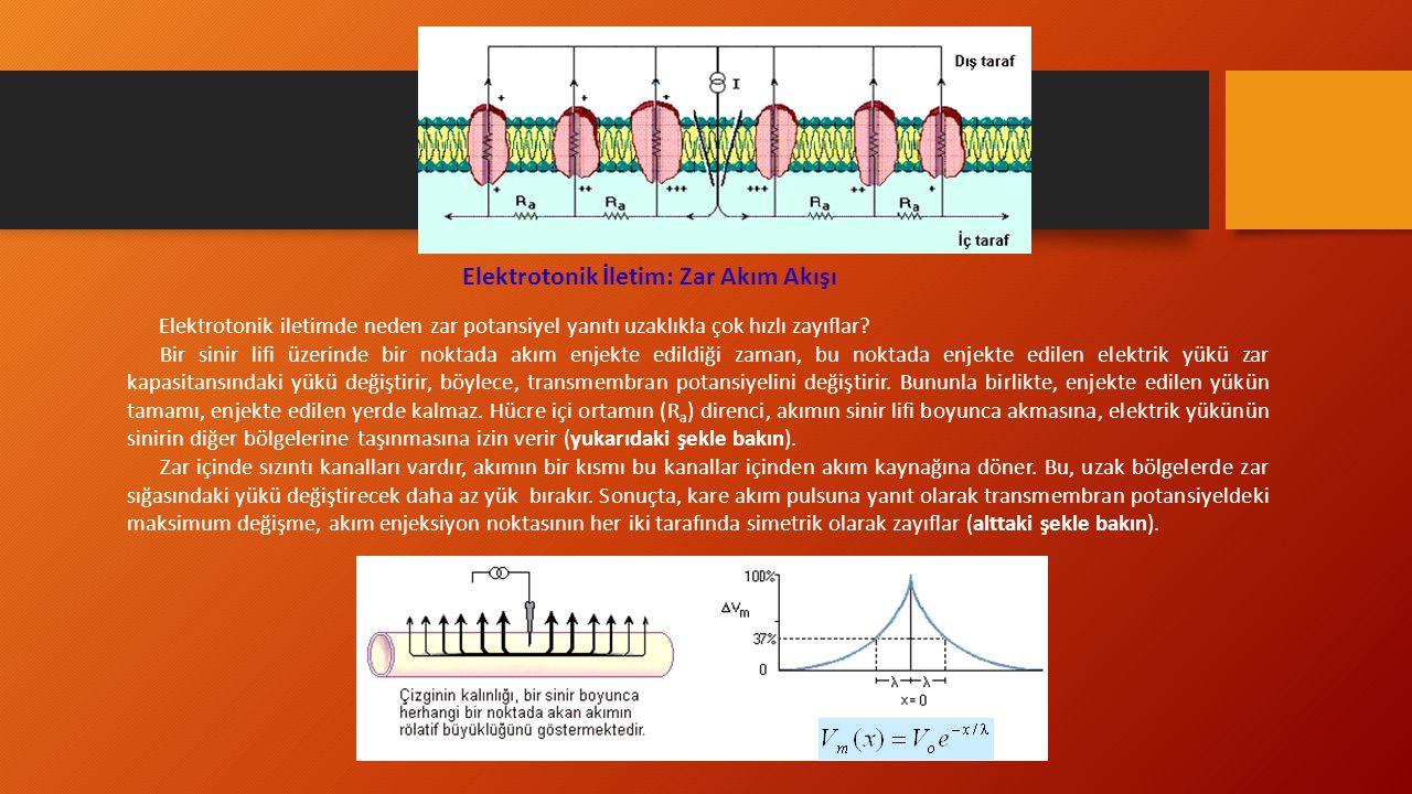 Elektrotonik İletim: Zar Akım Akışı