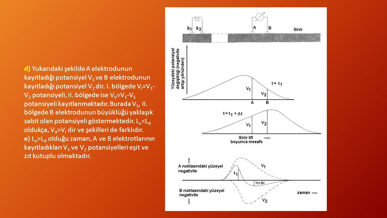 d) Yukarıdaki şekilde A elektrodunun kayıtladığı potansiyel V1 ve B elektrodunun kayıtladığı potansiyel V2 dir. I. bölgede VI=V1-V2 potansiyeli, II. bölgede ise VII=V1-VS potansiyeli kayıtlanmaktadır. Burada VS, II. bölgede B elektrodunun büyüklüğü yaklaşık sabit olan potansiyeli göstermektedir. Le<Ld oldukça, VII>VI dir ve şekilleri de farklıdır.
