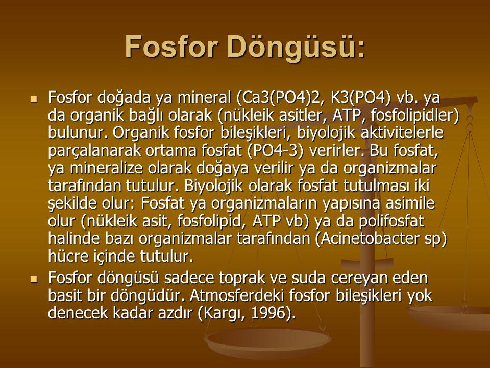 Fosfor Döngüsü: