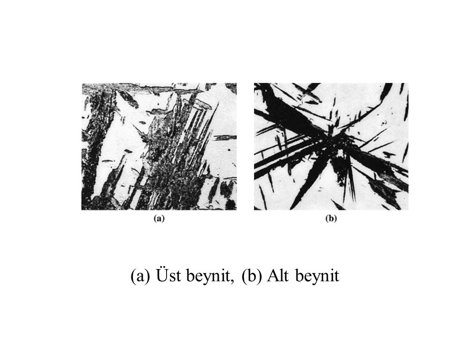 Üst beynit, (b) Alt beynit