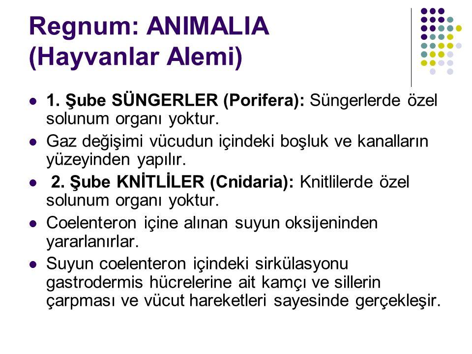 Regnum: ANIMALIA (Hayvanlar Alemi)