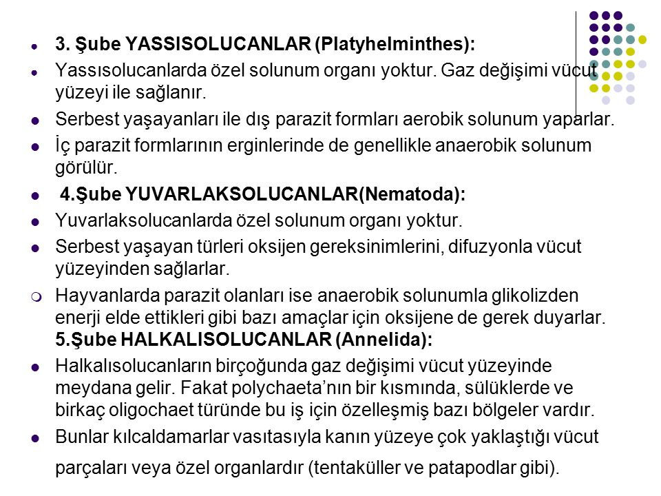 3. Şube YASSISOLUCANLAR (Platyhelminthes):