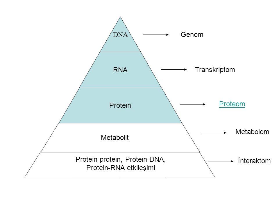 Protein-protein, Protein-DNA, Protein-RNA etkileşimi