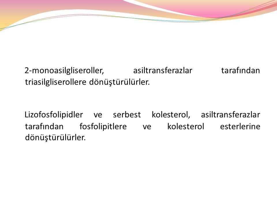 2-monoasilgliseroller, asiltransferazlar tarafından triasilgliserollere dönüştürülürler.