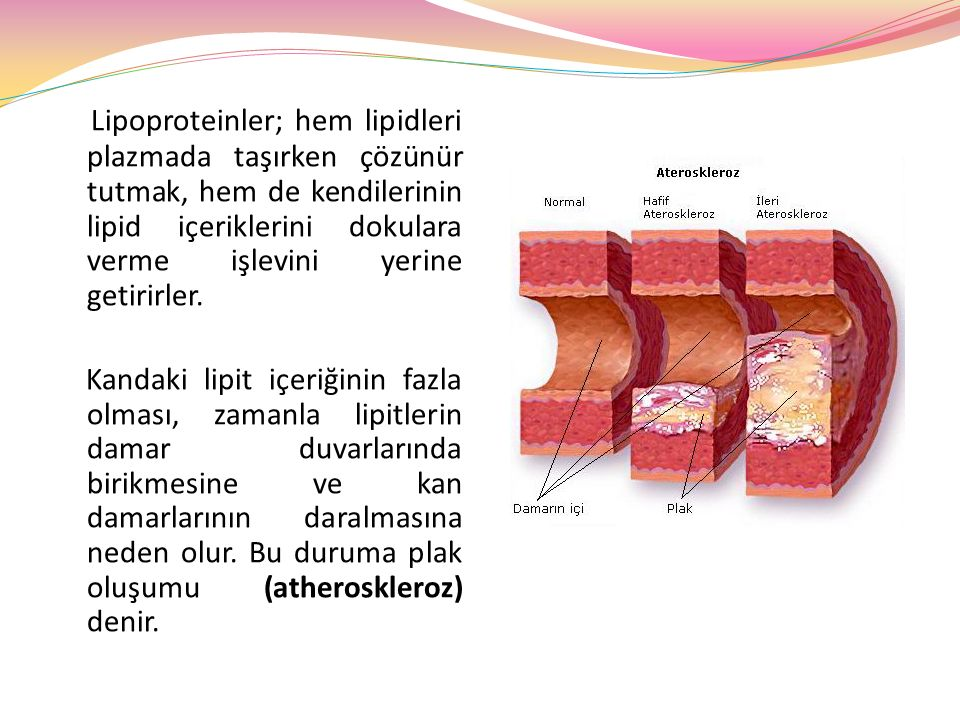 Lipoproteinler; hem lipidleri plazmada taşırken çözünür tutmak, hem de kendilerinin lipid içeriklerini dokulara verme işlevini yerine getirirler.