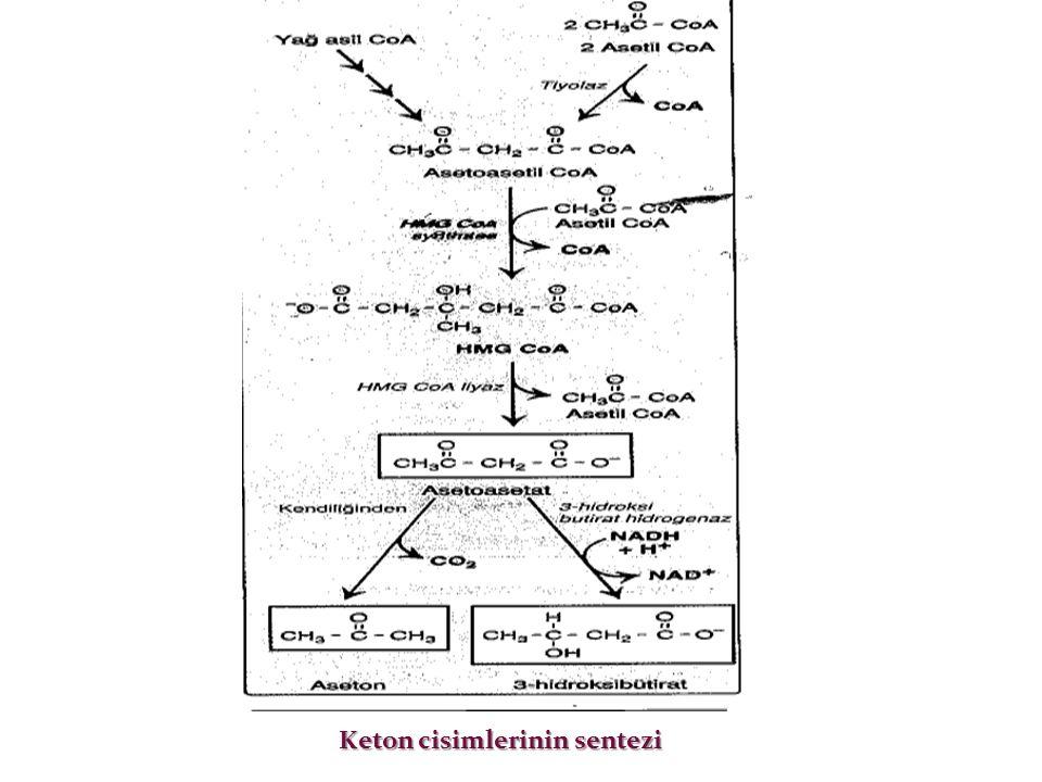 Keton cisimlerinin sentezi