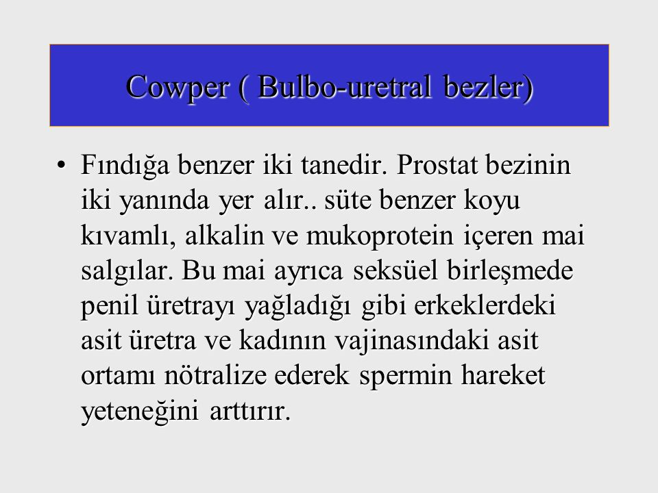 Cowper ( Bulbo-uretral bezler)