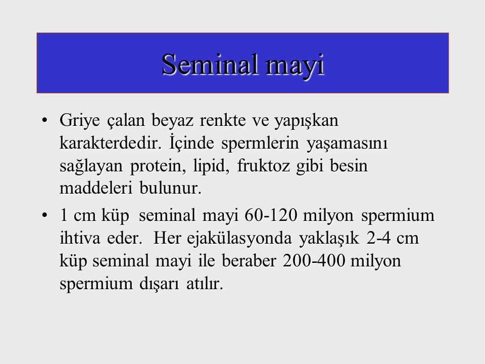 Seminal mayi