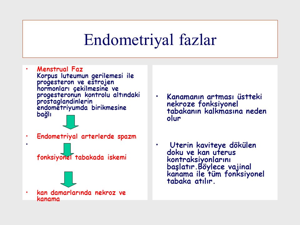 Endometriyal fazlar