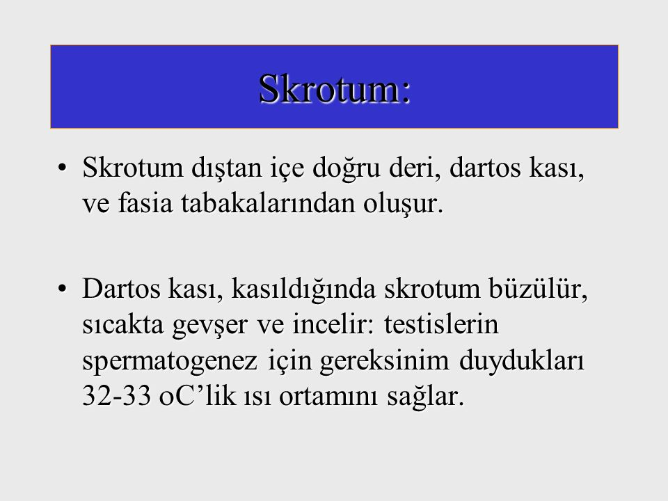 Skrotum: Skrotum dıştan içe doğru deri, dartos kası, ve fasia tabakalarından oluşur.