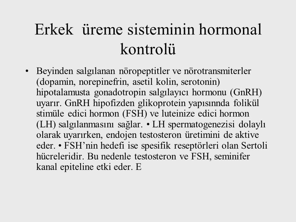 Erkek üreme sisteminin hormonal kontrolü