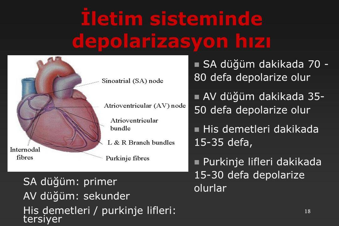 İletim sisteminde depolarizasyon hızı