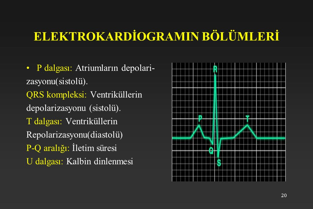 ELEKTROKARDİOGRAMIN BÖLÜMLERİ
