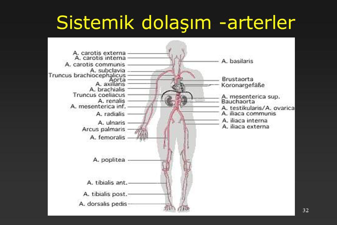 Sistemik dolaşım -arterler