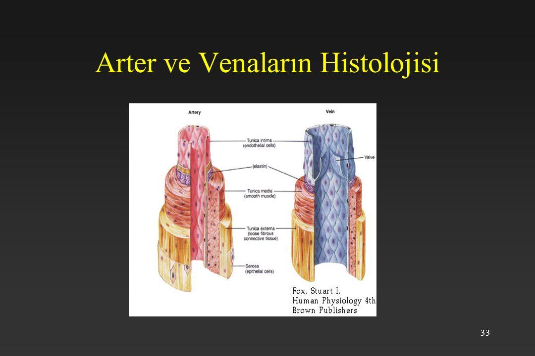 Arter ve Venaların Histolojisi