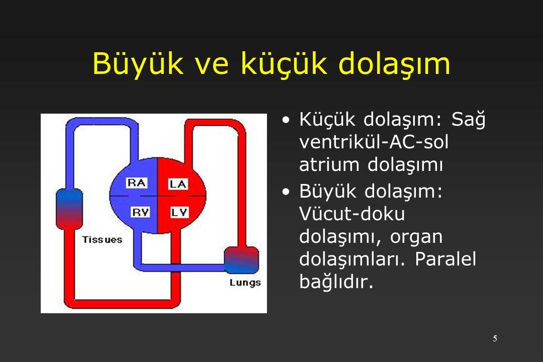 Büyük ve küçük dolaşım Küçük dolaşım: Sağ ventrikül-AC-sol atrium dolaşımı.