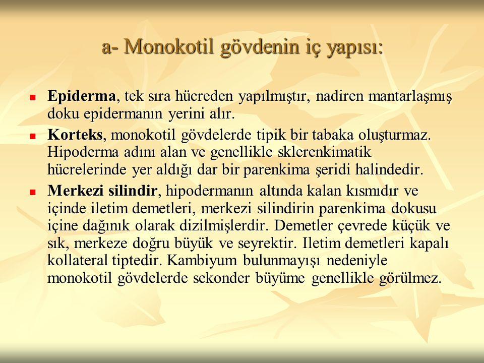 a- Monokotil gövdenin iç yapısı: