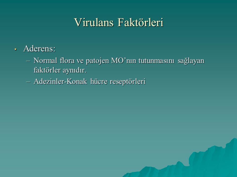 Virulans Faktörleri Aderens: