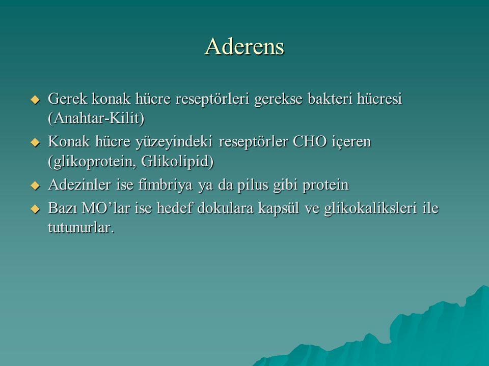Aderens Gerek konak hücre reseptörleri gerekse bakteri hücresi (Anahtar-Kilit)