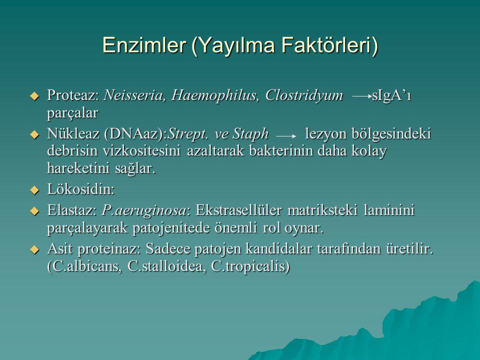 Enzimler (Yayılma Faktörleri)