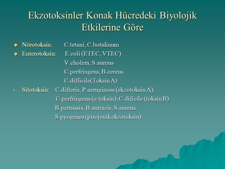 Ekzotoksinler Konak Hücredeki Biyolojik Etkilerine Göre