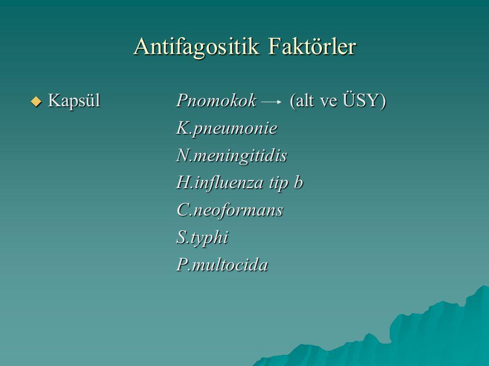 Antifagositik Faktörler