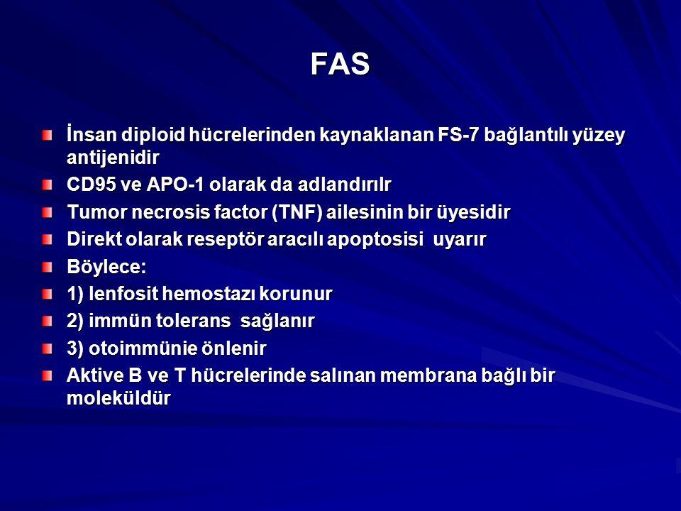 FAS İnsan diploid hücrelerinden kaynaklanan FS-7 bağlantılı yüzey antijenidir. CD95 ve APO-1 olarak da adlandırılr.