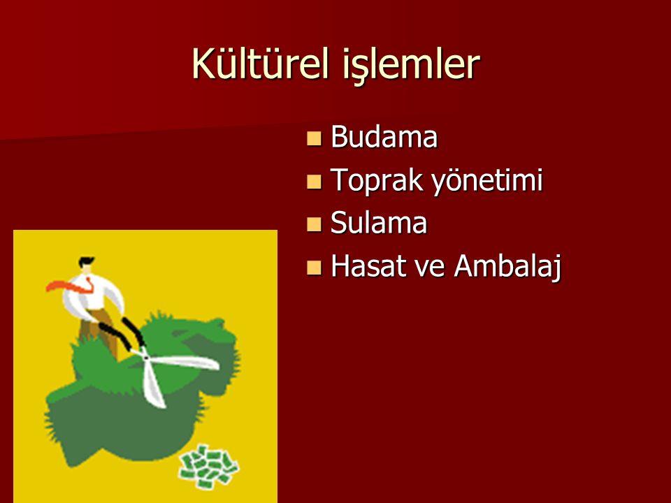 Kültürel işlemler Budama Toprak yönetimi Sulama Hasat ve Ambalaj