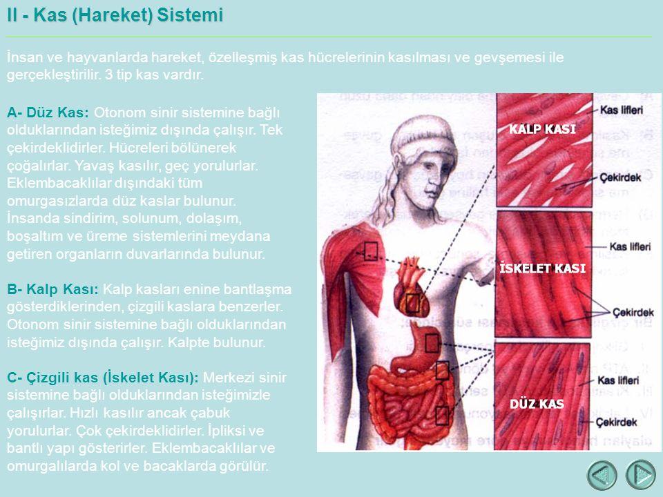 II - Kas (Hareket) Sistemi