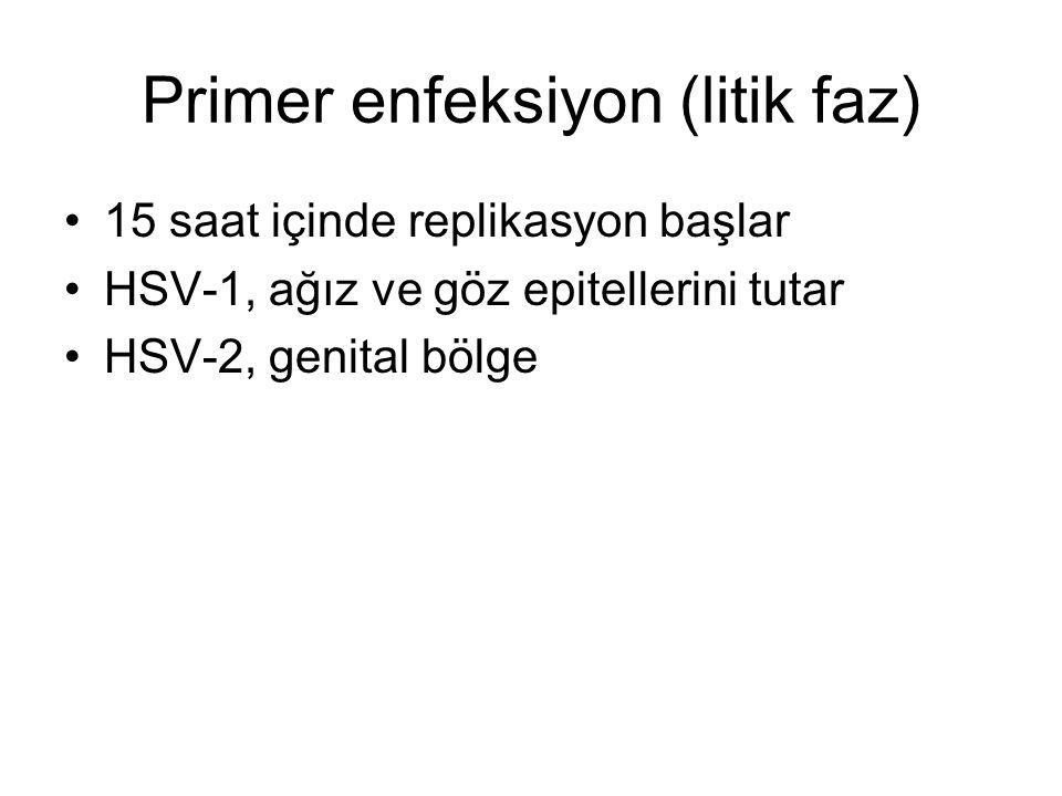 Primer enfeksiyon (litik faz)