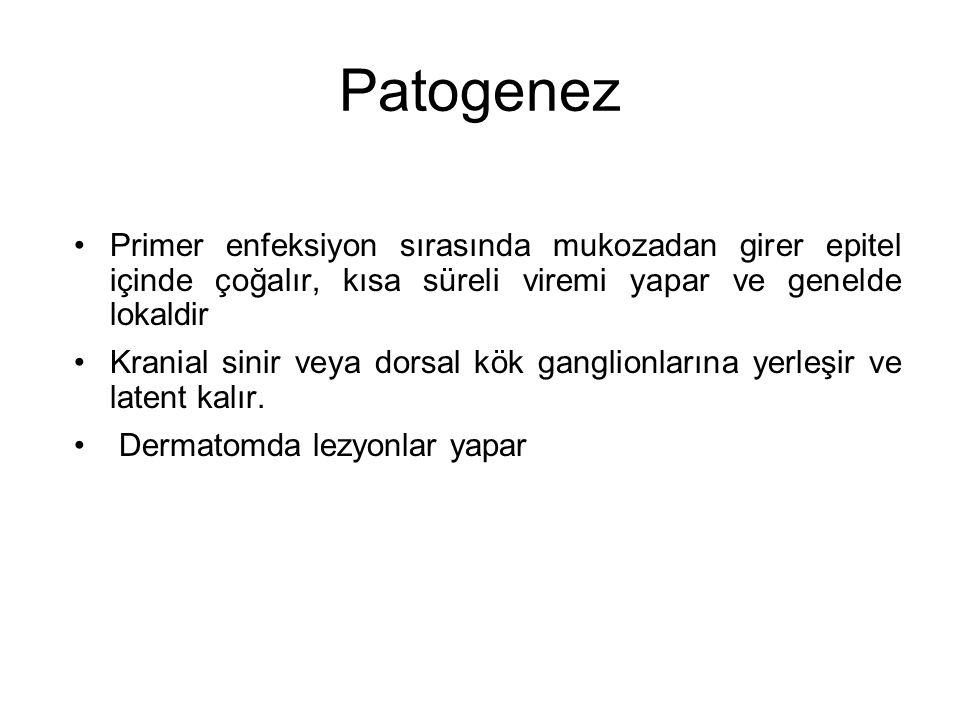 Patogenez Primer enfeksiyon sırasında mukozadan girer epitel içinde çoğalır, kısa süreli viremi yapar ve genelde lokaldir.