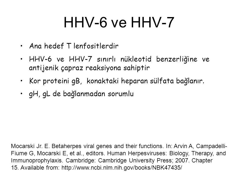 HHV-6 ve HHV-7 Ana hedef T lenfositlerdir