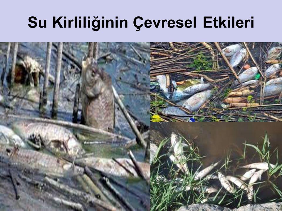 Su Kirliliğinin Çevresel Etkileri