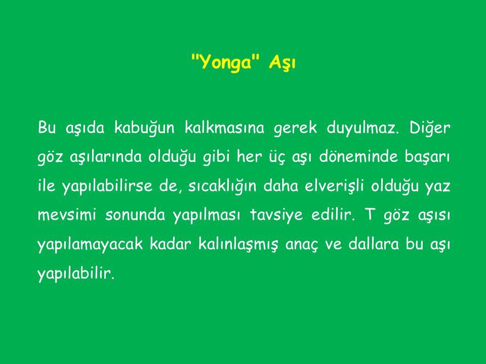 Yonga Aşı