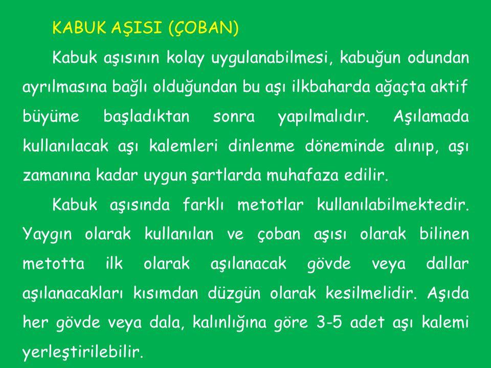 KABUK AŞISI (ÇOBAN)