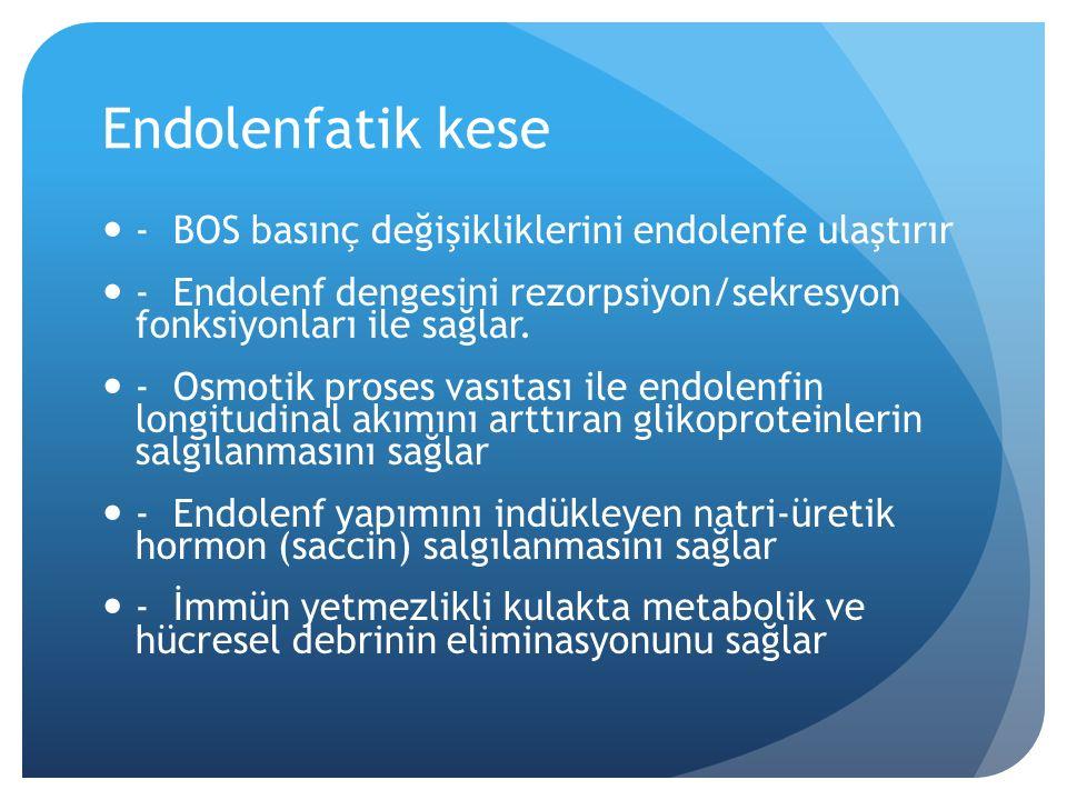 Endolenfatik kese - BOS basınç değişikliklerini endolenfe ulaştırır