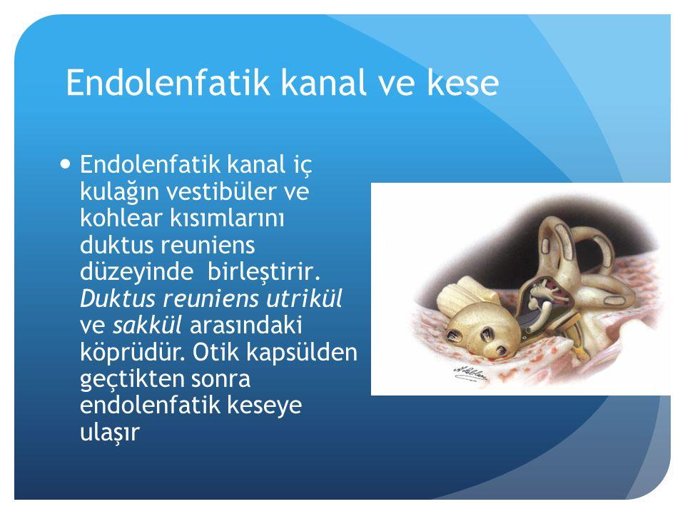 Endolenfatik kanal ve kese