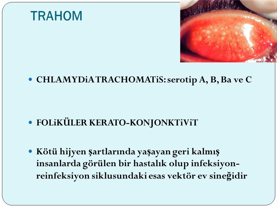 TRAHOM CHLAMYDiA TRACHOMATiS: serotip A, B, Ba ve C