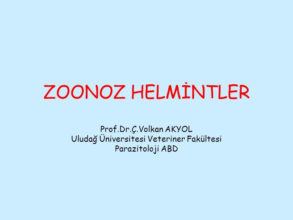 Uludağ Üniversitesi Veteriner Fakültesi