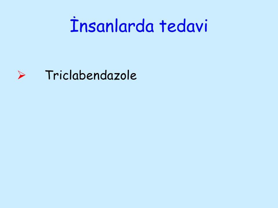 İnsanlarda tedavi Triclabendazole