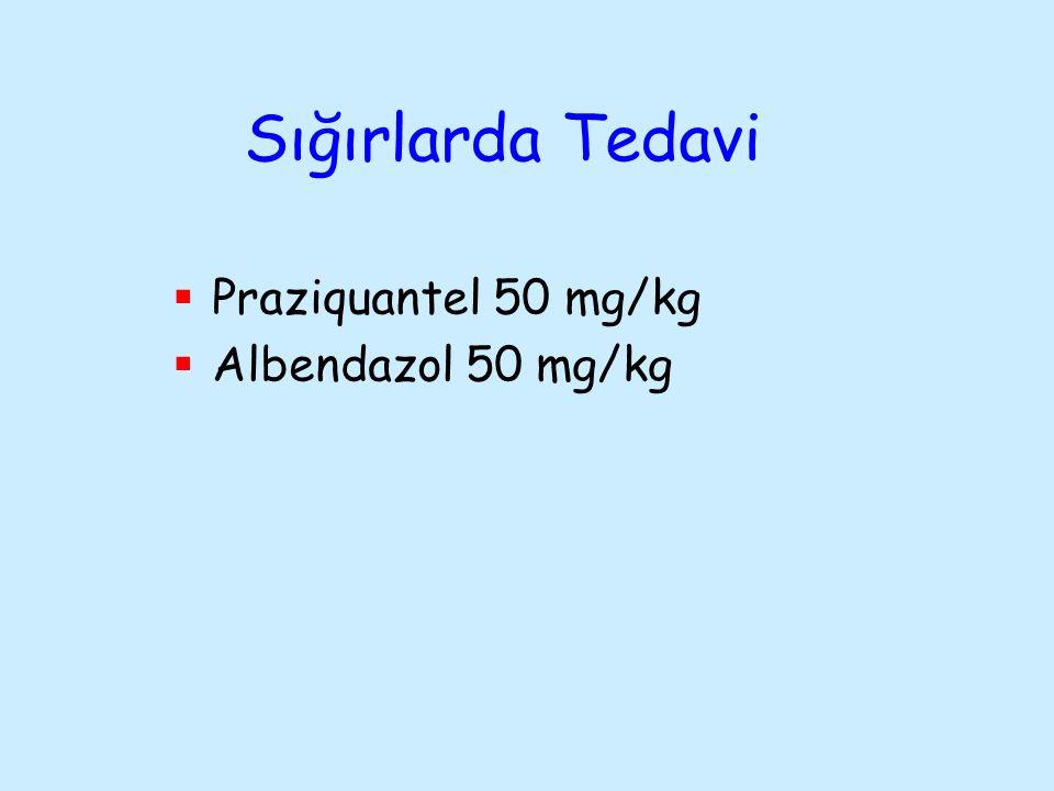 Sığırlarda Tedavi Praziquantel 50 mg/kg Albendazol 50 mg/kg