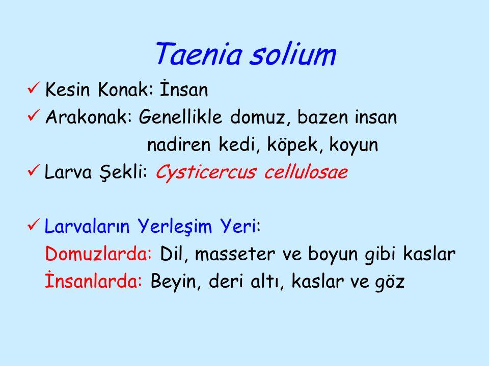Taenia solium Kesin Konak: İnsan
