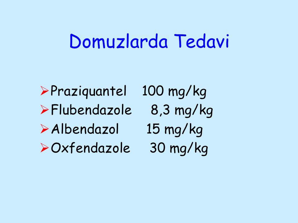 Domuzlarda Tedavi Praziquantel 100 mg/kg Flubendazole 8,3 mg/kg