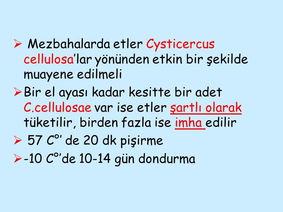 Mezbahalarda etler Cysticercus cellulosa'lar yönünden etkin bir şekilde muayene edilmeli