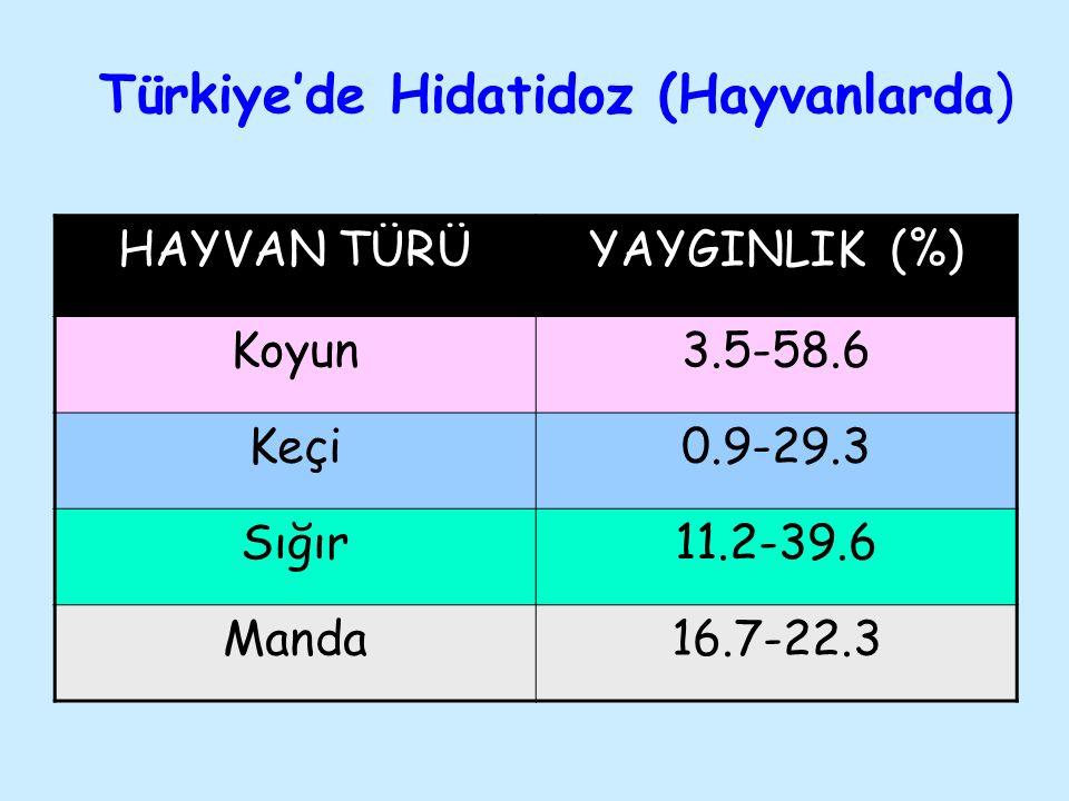 Türkiye'de Hidatidoz (Hayvanlarda)