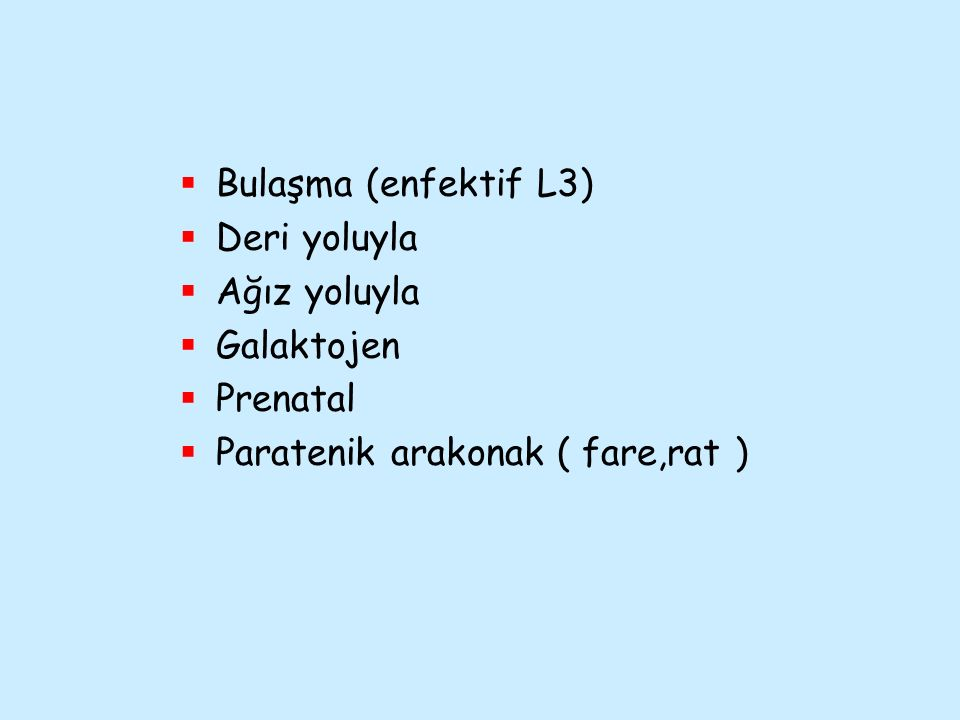 Bulaşma (enfektif L3) Deri yoluyla Ağız yoluyla Galaktojen Prenatal Paratenik arakonak ( fare,rat )
